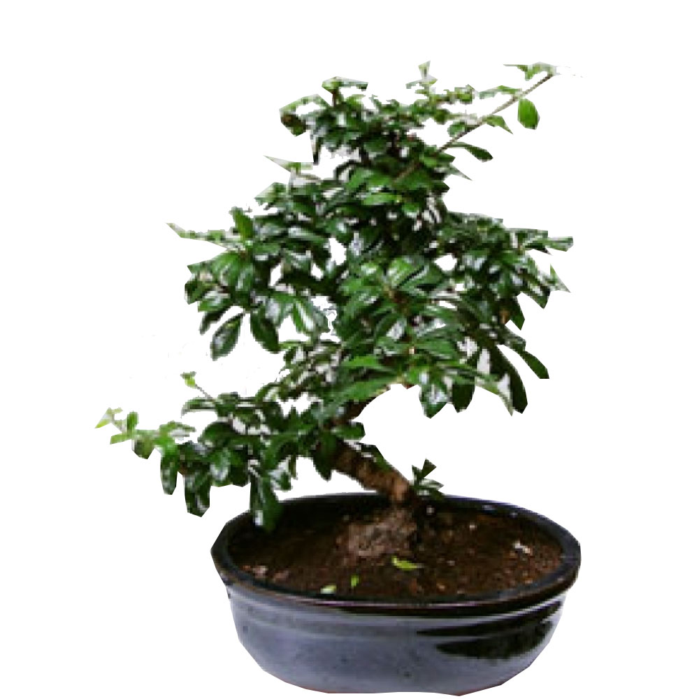 bonsai-saksi-cicegi